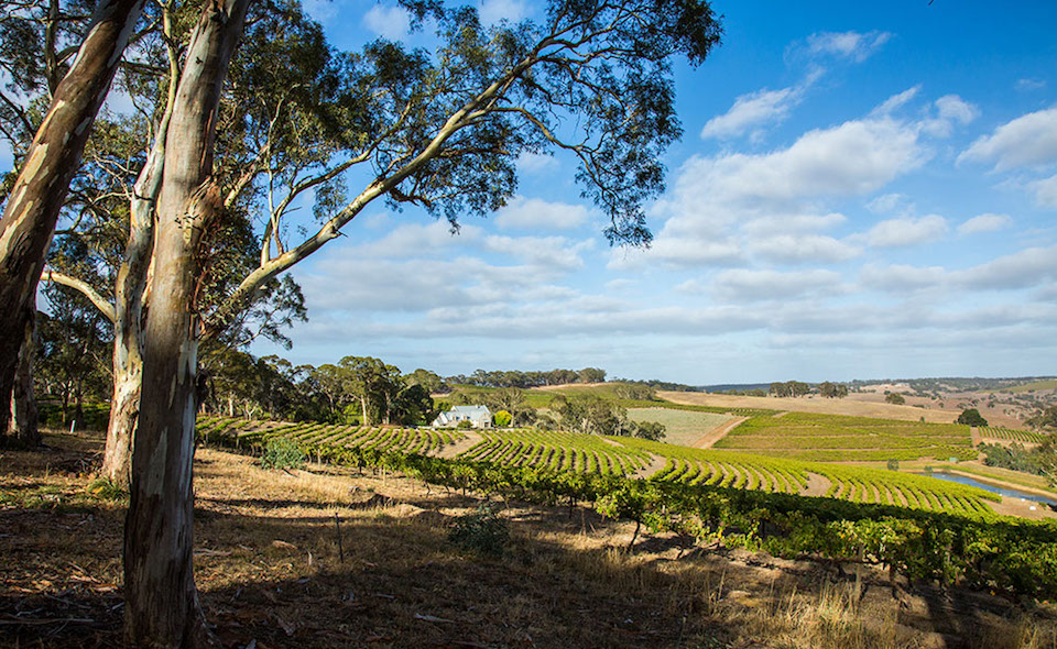 Hickinbotham Clarendon Vineyard